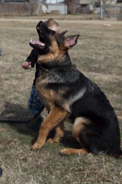 Bane 6 months old...-image.jpg