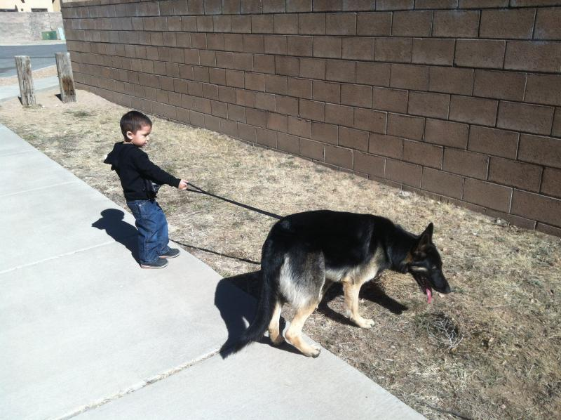 Dog being rude towards my son-image.jpg