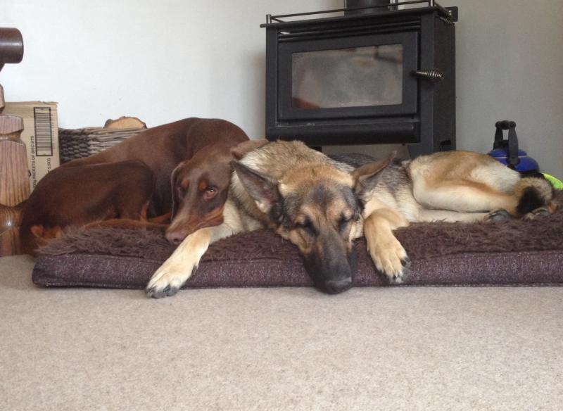 Best mates chilling out before their run..-image.jpg