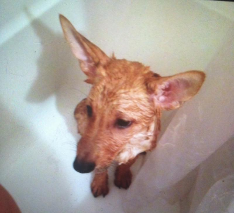 Not a big fan of the bath...-image.jpg