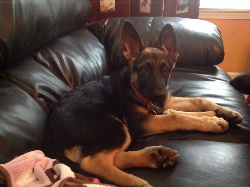 New puppy Tori-image.jpg
