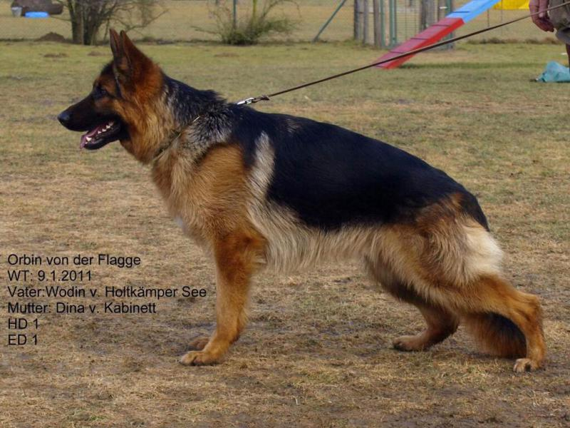 Soon to be new GSD owner from Socal-image.jpg