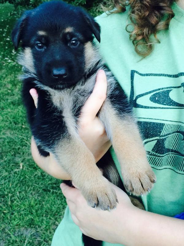 New Puppy :)-image.jpg