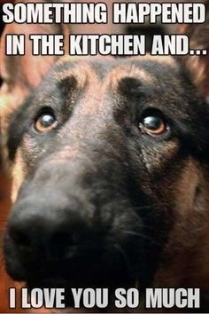 Funny GSD memes - Page 6 - German Shepherd Dog Forums