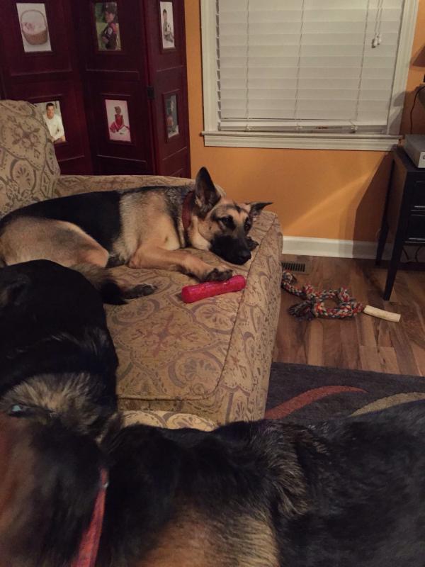 Tori guarding toy-image.jpg
