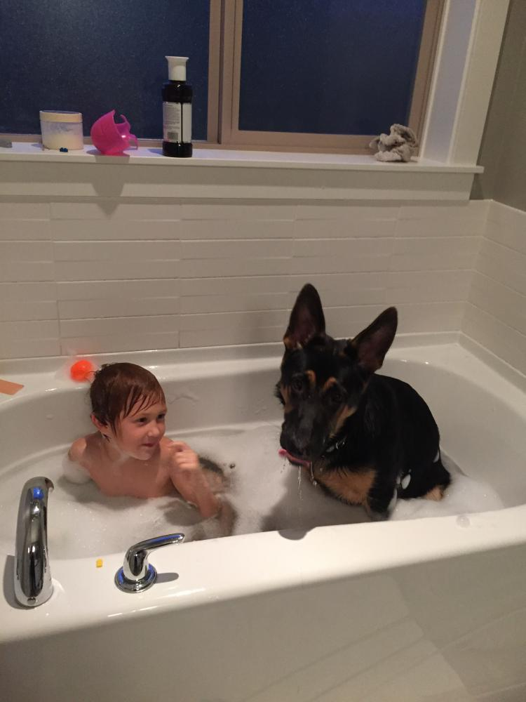 How To Get Your Pup In The Tub For A Bubble Bath German