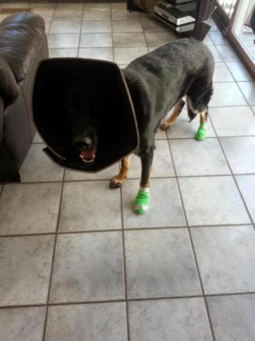 Split Paw Pad German Shepherd Dog Forums