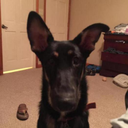 7 month olds Ear-image_1437609062599.jpg