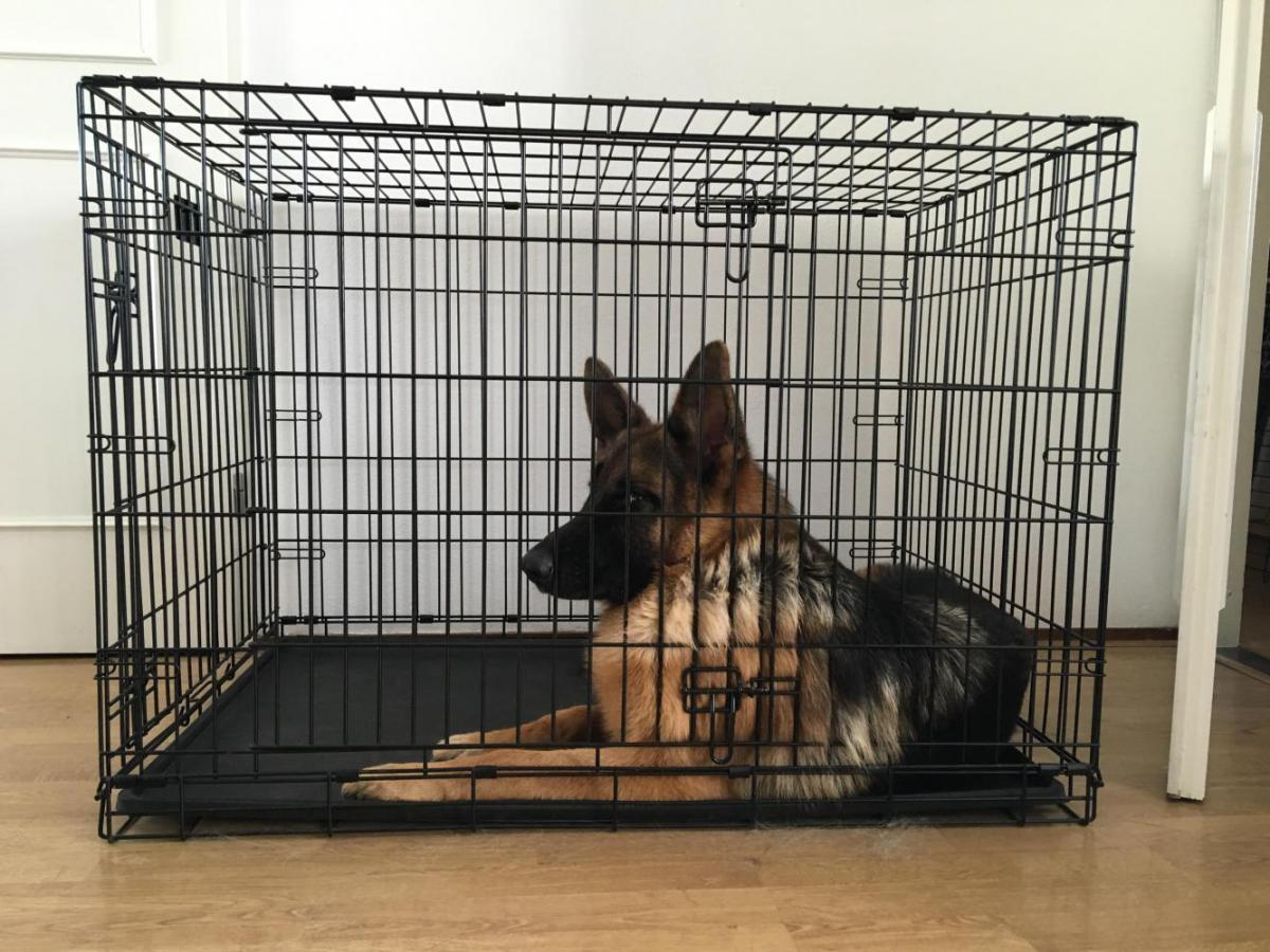 Dog Business For Sale