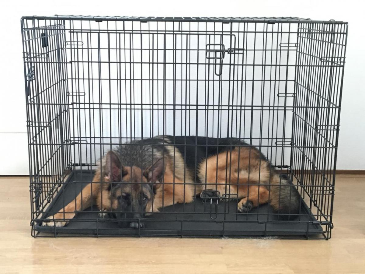 dog crates for german shepherds goldenacresdogscom With dog crate size for german shepherd