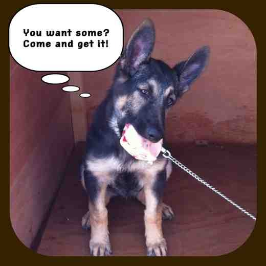 Fun with Captions-imageuploadedbypetguide1356991141.258921.jpg