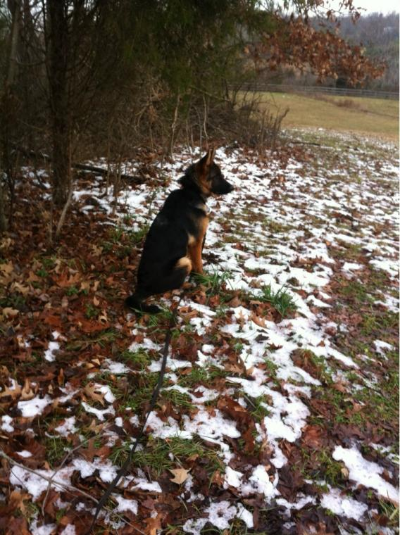 Show Me your Furry Friend in the snow.-imageuploadedbypetguide1357676395.508558.jpg