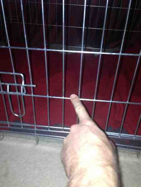 What to do?! Metal crate incident with paw! PLS READ!-imageuploadedbypetguide1386605932.812163.jpg
