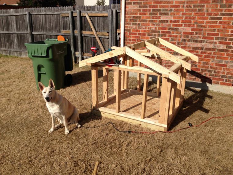 Elegant Imageuploadedbypetguide1387342800.996596 Dog House I Built For Girl  Chaucey, Pics! Imageuploadedbypetguide1387342832.099052 ...
