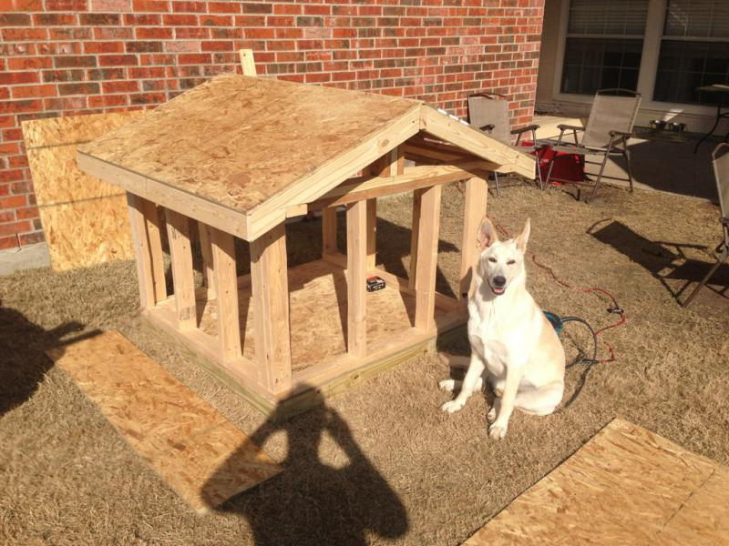 Dog House I Built For Girl Chaucey Pics German