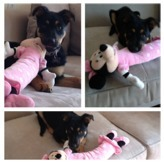 SHOW ME... Your dog's toys!-imageuploadedbypg-free1348176349.570033.jpg