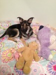 6 month old ears not up after teething-imageuploadedbypg-free1350282422.858478.jpg