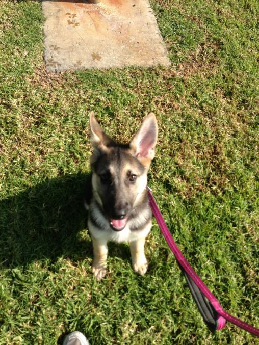 Puppy greeting.. HELP!-imageuploadedbypg-free1351975839.261655.jpg