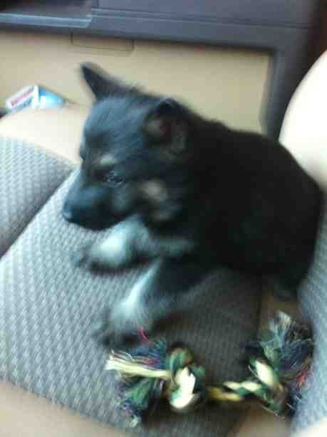 Question on new puppy-imageuploadedbypg-free1352819490.920109.jpg