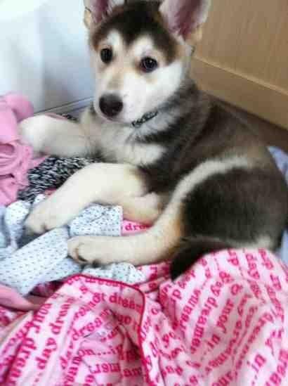 New Puppy-imageuploadedbypg-free1353134959.835961.jpg