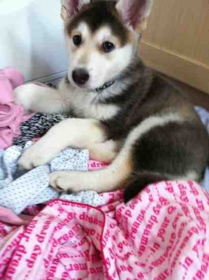 New Puppy-imageuploadedbypg-free1353189107.276987.jpg