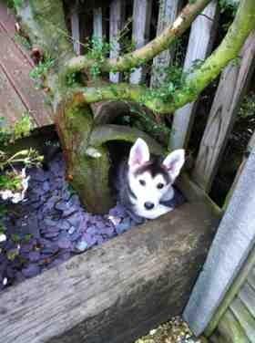 New Puppy-imageuploadedbypg-free1353189193.080408.jpg