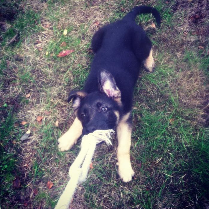 My new pup :P-imageuploadedbypg-free1353710665.436292.jpg