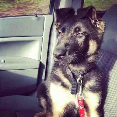 My new pup :P-imageuploadedbypg-free1353710748.325482.jpg