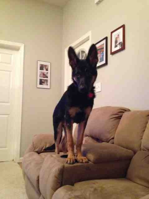 Onyx :) 5 months old-imageuploadedbypg-free1353722548.924938.jpg