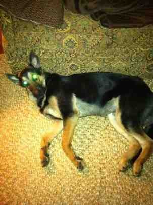 Unsure of lines..adopted w/o papers...-imageuploadedbypg-free1353809883.441335.jpg