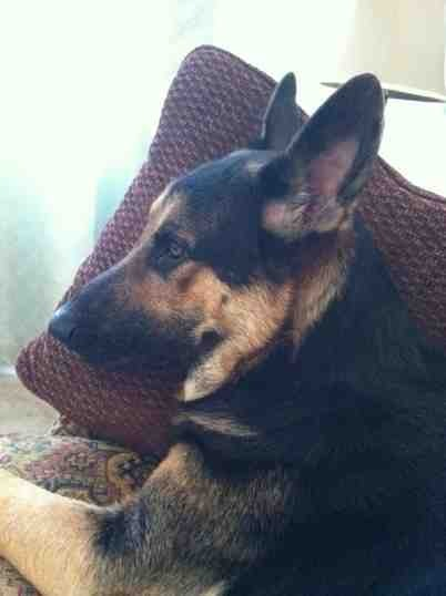 Unsure of lines..adopted w/o papers...-imageuploadedbypg-free1353809900.047912.jpg
