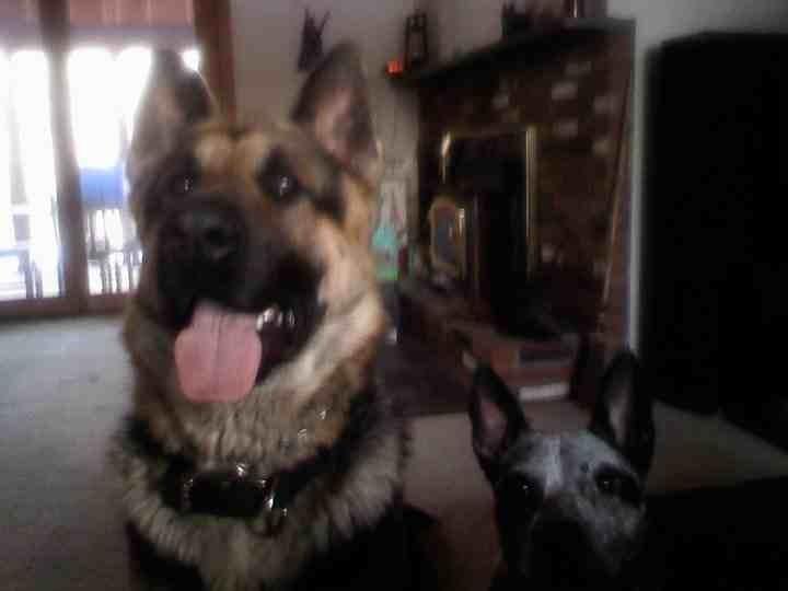 Hello everyone ! Meet Cooper-imageuploadedbypg-free1353889468.873664.jpg