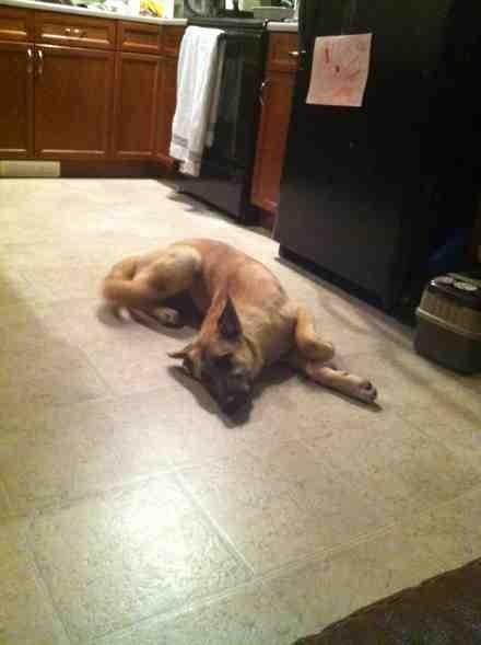 My dog sleeps funny-imageuploadedbypg-free1353913158.486770.jpg