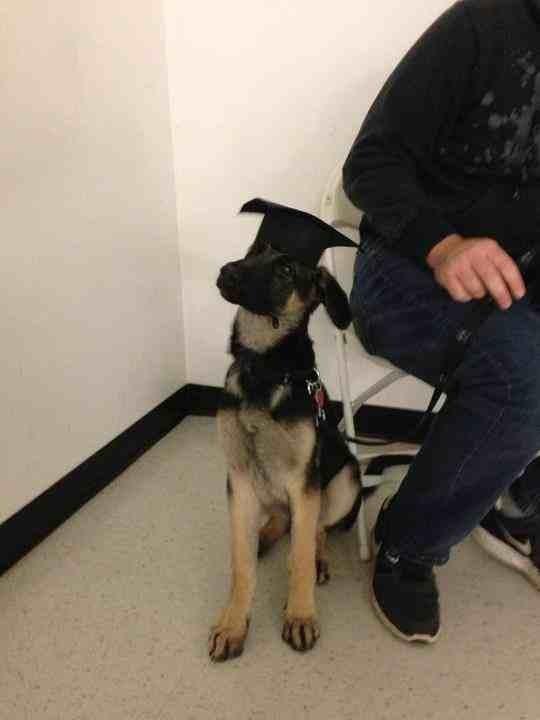 Graduated puppy class!!-imageuploadedbypg-free1354126275.043197.jpg