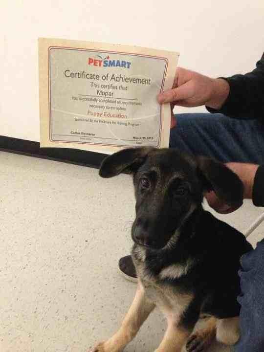 Graduated puppy class!!-imageuploadedbypg-free1354135909.553581.jpg