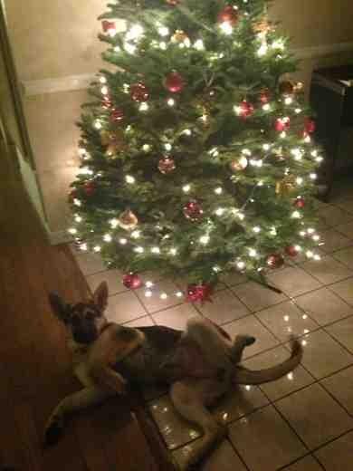 1st Christmas-imageuploadedbypg-free1354164313.794913.jpg