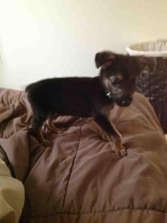 Malnourished puppy-imageuploadedbypg-free1354216971.830916.jpg