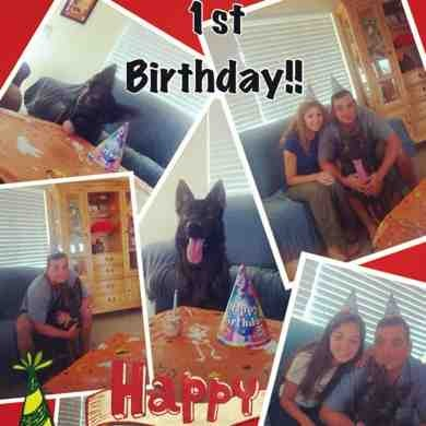 Rocco's 1st Birthday (delayed)-imageuploadedbypg-free1354664203.267773.jpg