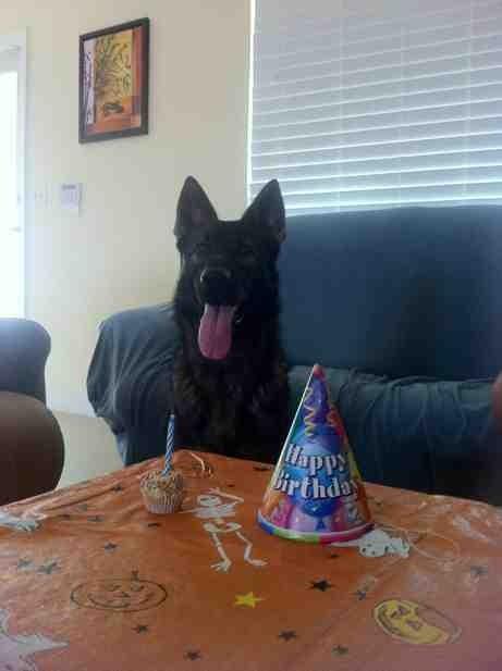 Rocco's 1st Birthday (delayed)-imageuploadedbypg-free1354664245.024745.jpg