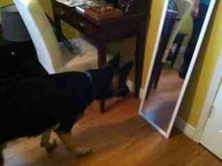 Puppy Love-imageuploadedbypg-free1354831902.363896.jpg