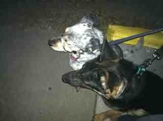 Puppy Love-imageuploadedbypg-free1354832040.148659.jpg