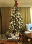 Show me your Christmas tree!-imageuploadedbypg-free1355100049.029453.jpg