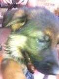 Puppy tips-imageuploadedbypg-free1355135779.816676.jpg