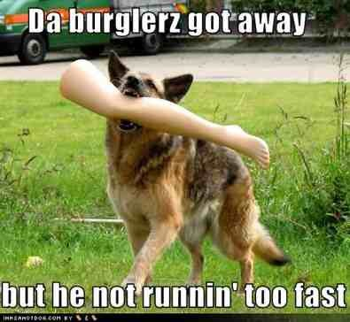 Some Funny Gsd Pics I Wanted To Share German Shepherd Dog Forums