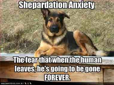 Funny German Shepherd Police Dogs Quotes
