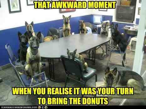 Some funny GSD pics I wanted to share!-imageuploadedbypg-free1355367900.137287.jpg
