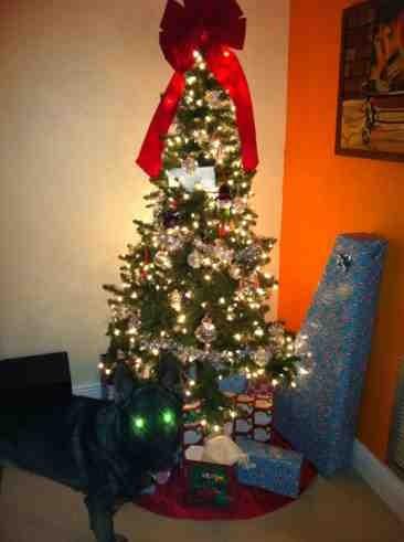 Christmas tree guard dog.-imageuploadedbypg-free1356536737.695149.jpg
