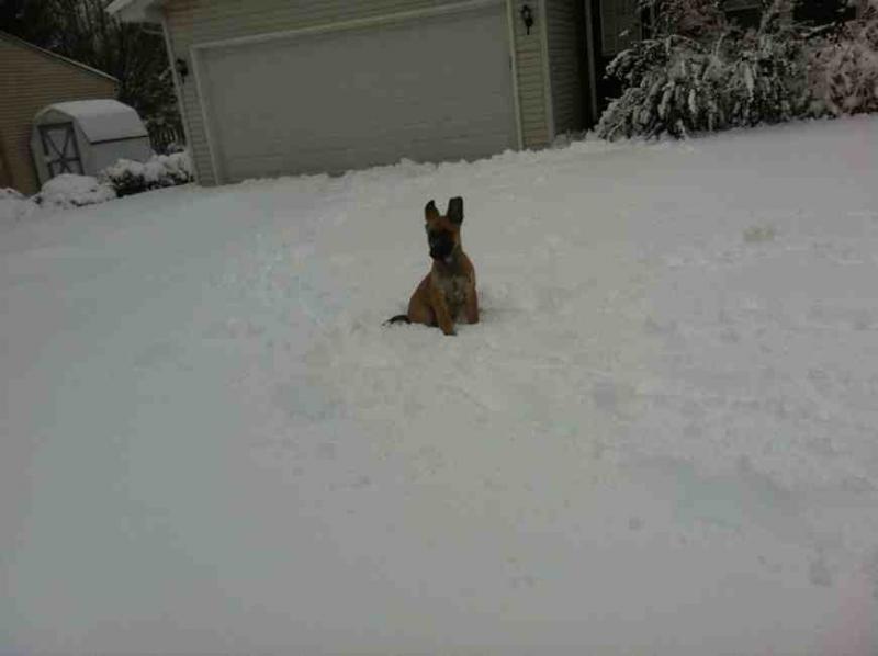 SNOW puppy!-imageuploadedbypg-free1356555306.065797.jpg
