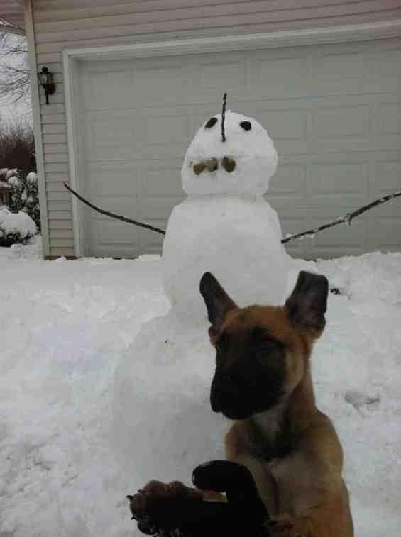 SNOW puppy!-imageuploadedbypg-free1356555327.514178.jpg