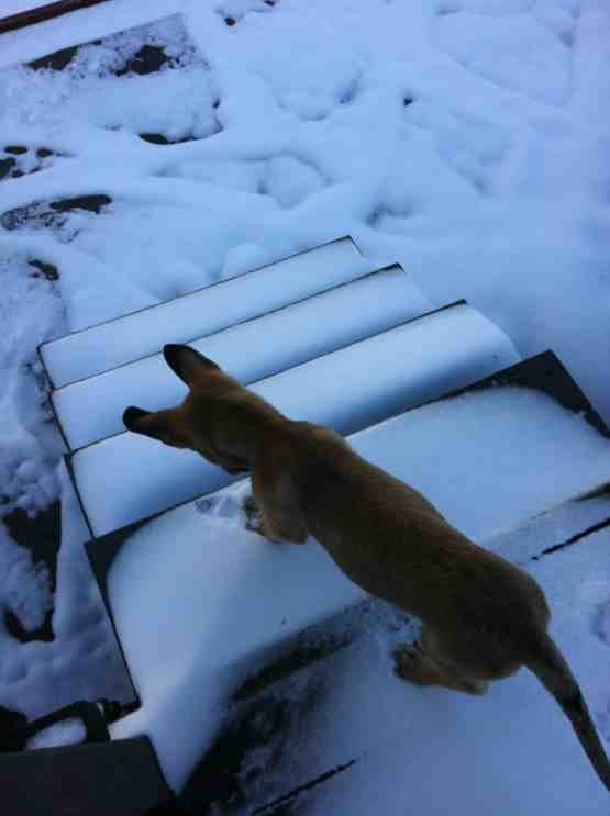 SNOW puppy!-imageuploadedbypg-free1356555367.547772.jpg